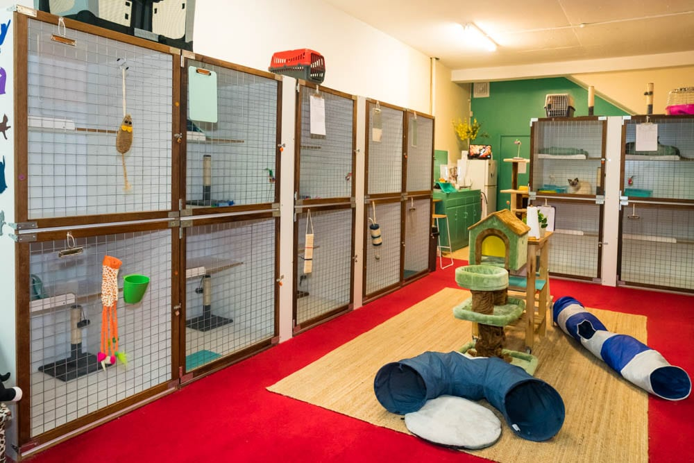 Little Meow Cattery Montmorency